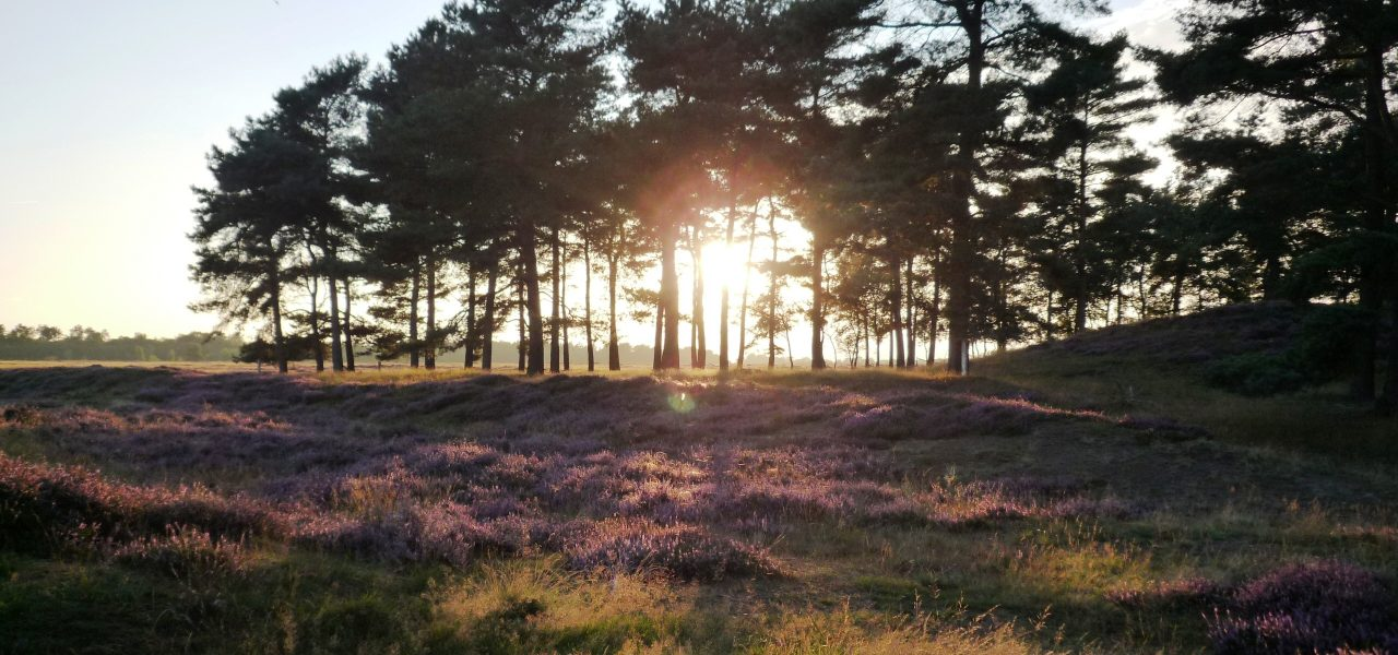 balloerveld-grafheuvel-bij-zonsondergang